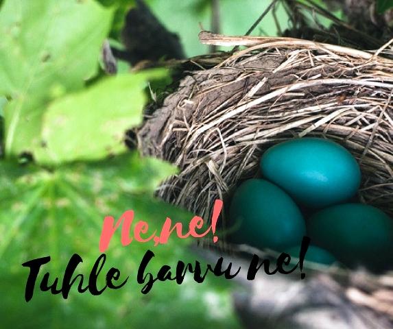 Modré vejce ne
