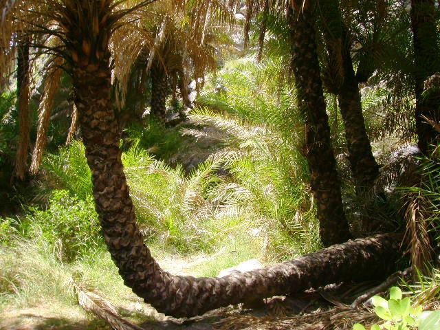 Palmový les_3