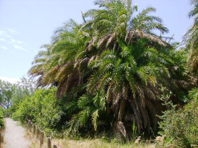 Palmový les_4