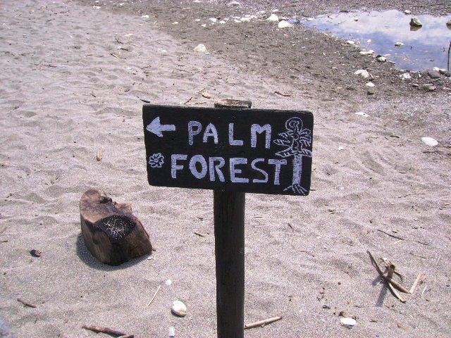 Směrovka Palm Forest
